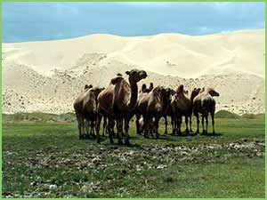 The Gobi desert zone - Natural zones of Mongolia